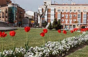Plantación de flores en Bejanque