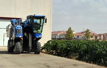 Arranca la vendimia en Castilla-La Mancha marcada por una uva de gran calidad. Foto: ASAJA CLM.