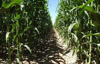 """El Ministerio de Agricultura, Alimentación y Medio Ambiente publica un documento con las preguntas más frecuentes sobre el pago verde o """"greening"""". Foto: Ministerio de Agricultura, Alimentación y Medio Ambiente"""