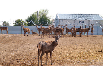 Granja experimental de ciervos del IREC, en Albacete.