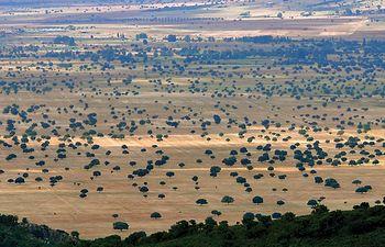 Parque Nacional de Cabañeros, entre las provincias de Ciudad Real y Toledo.