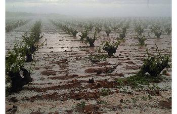 ACM. Seguros contra el Pedrisco. Foto: Cooperativas Agro-alimentarias.