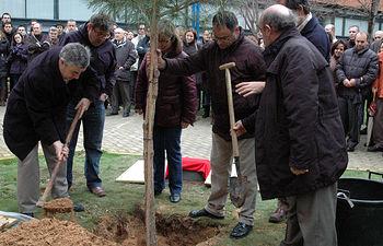 Plantación de un Pinus Nigra