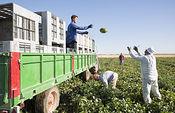 Campaña de melón de Castilla-La Mancha.