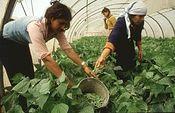Actividad empresarial de la mujer rural. Foto: Ministerio de Medio Ambiente, y Medio Rural y Marino