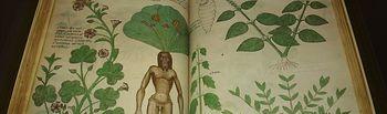 Tractatus de Herbis - Tratado de hierbas. Imagen de archivo.