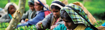 En el ámbito de esta actividad comercial, los productos alimenticios acaparan el 56% de las ventas. Foto: Trabajadoras en una plantación de Té cuyos frutos se comercializan bajo la red de comercio justo.