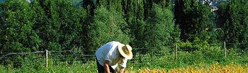 """El Ministerio de Agricultura, Alimentación y Medio Ambiente publica el """"Informe de Contratación del Seguro Agrario"""" correspondiente al cuarto trimestre de 2015. Foto: Ministerio de Agricultura, Alimentación y Medio Ambiente"""