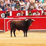 David Mora - Su primer toro1 - Feria Taurina Albacete 14-09-16 - Para web