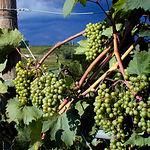 Los vinos de Finca Antigua son unos de los productos vitivinícolas mejor elaborados de La Mancha.