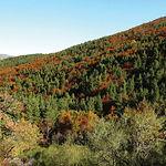 Las distintas tonalidades del bosque del Hayedo confieren a este bosque un aire misterioso y especial.