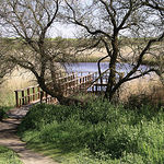 La única vegetación arbórea del interior del Parque es el taray, que forma pequeños bosques sobre suelos húmedos.