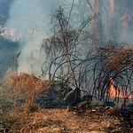 Castilla-La Mancha es una región con unos peligrosos niveles de incendios.