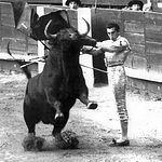 El 15 de agosto de 1959 hizo su debut con caballos en Cartagena, cortando tres orejas y un rabo y saliendo a hombros.