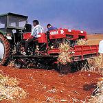 La I.G. Ajo Morado de Las Pedroñeras ampara la producción de 227 municipios de CLM.