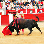 David Mora - Su segundo toro-5 - Feria Taurina Albacete 14-09-16 - Para web