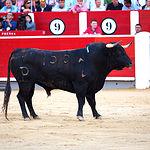 Rubén Pinar - Su primer toro-7 - Feria Taurina Albacete - 14-09-16 - Para web