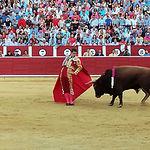 """El Juli, toreando al toro """"Cortesano"""", de la ganadería de Daniel Ruiz."""