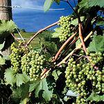 El futuro del sector vitivinícola pasa por potenciar la promoción y comercialización de los productos derivados de la viña y mantener el criterio de calidad.