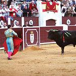 """El toro """"Gastasuelas"""" de la ganadería Marqués de Domecq, obtuvo el Premio al toro más bravo."""