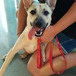 Refugio de animales Happy Dog de Toledo.