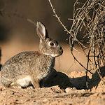 La situación de la caza menor actualmente es muy buena en cuanto al conejo.