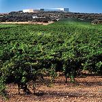 Procedentes de uvas de la mejor calidad, Finca Antigua elabora el vino Clavis, el escalón más alto de su gama de vinos.