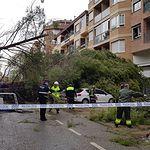 Árboles caídos en la Fiesta del Árbol. Foto: Policía Local (Twitter)