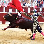 """El toro """"Jarocho"""", lidiado por Antón Cortés, de la ganadería El Torero, recibió el Premio Samueles al Toro más Bravo."""