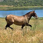 """Los caballos de pura raza española corren y pastan libremente en la finca """"El Palomar""""."""