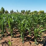 Zona de uso agrario y aprovechamiento forestal del Jardín Botánico en Albacete.