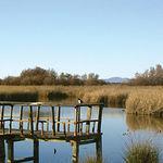 El desarrollo ecológico de la naturaleza y de los animales guarda un gran paralelismo con el desarrollo económico de la sociedad humana. Foto Parque Nacional de las Tablas de Daimiel.