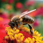 La miel fabricada en La Alcarria es una marca muy conocida y reconocida tanto en España como a nivel internacional.