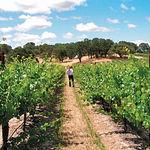 Ignacio de Miguel considera excesivo las 600.000 ha. de viñedo de Castilla-La Mancha, apostando más por la calidad.