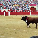 """""""Cortesano"""", toro de la ganadería de Daniel Ruiz, indultado en la tarde de este jueves, 17 de septiembre, por Julián López """"El Juli""""."""