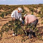 Este año se estima una disminución de la producción de la cosecha regional en torno al diez o doce por ciento.