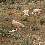Los terrenos destinados únicamente a pastos están formados, generalmente, por sustratos ricos en calizas, con una  vegetación potencial de árboles y arbustos perennes -encinas o carrascas- y monte bajo de coscoja y espino negro.