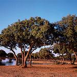 Con 11.000 hectáreas, la finca Dehesa de Los LLanos se extiende en la campiña junto a la ciudad de Albacete.
