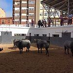 Toros Feria Taurina - 16-09-18 - Desde el Apartado