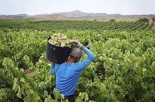Empleo agrario. Foto: EFE.