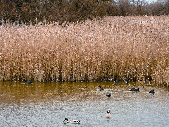 Es Estado adquirió, en diciembre de 2007, 566 hectáreas del entorno del Parque Nacional para su recuperación hídrica.