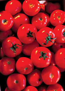 El tomate Flavr Savr es un ejemplo de vegetal con genes contrasentido.