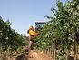 El agropecuario, un sector estratégico de la economía regional