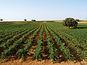 La D.O. Manchuela busca un sitio de privilegio en el sector vitivinícola